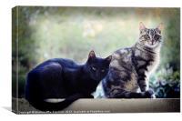 Cats postures, Canvas Print