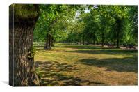 Greenwich Park, Canvas Print