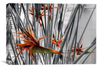 Birds of Paradise - Kew Gardens, Canvas Print
