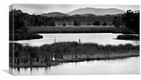 Backwater #7, Canvas Print