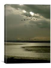 Brent geese flight
