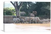 Elephants Bathing, Canvas Print