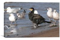 Cormorant ?? and friends., Canvas Print