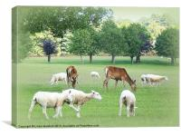 Grazing at Tatton Park., Canvas Print