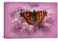 Tortoiseshell Butterfly on Pink Sedum., Canvas Print