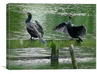 Cormorants in the Park., Canvas Print