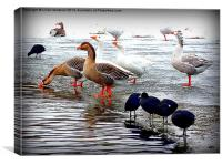 Frozen Boating Lake., Canvas Print