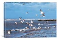 Seagulls on the Beach,, Canvas Print