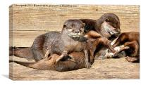 Otters Playing., Canvas Print