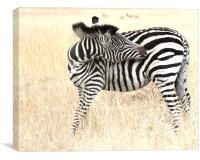 The Solitary Zebra, Canvas Print