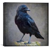 Crow, Canvas Print