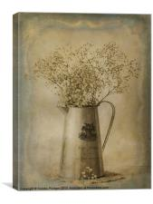 Gypsophylia, Canvas Print