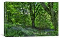 Billinge Woods Bluebells