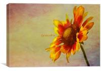 Gaillardia, Canvas Print