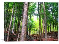 Adirondack Mountain Forest, Canvas Print