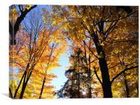 Autumn Trees at Lake Placid, Canvas Print