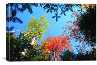 Autumn Trees in America, Canvas Print