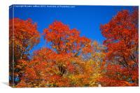 Autumn Maple Trees, Canvas Print