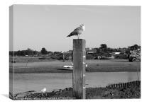 Seabird On Tide Marker, Canvas Print