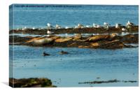 GULLS AND SEALS, Canvas Print