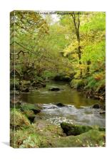 WOODLAND WATERS, Canvas Print