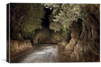 Olive Grove night Drive, Canvas Print