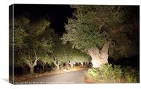Scary Olive Grove Night Drive #2, Canvas Print