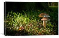 Fungi in the spotlight light