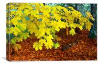 Autumn's Leaves, Canvas Print