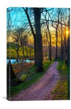 A Sunny Woodland Pathway, Canvas Print