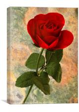 Red Rose on Texture, Canvas Print
