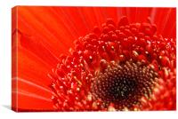 Red Flower, Canvas Print