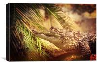 Crocodylus Moreletii, Canvas Print