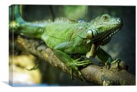 Green Iguana, Canvas Print