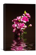 Carnations, Canvas Print