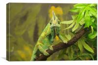Veiled chameleon, Canvas Print