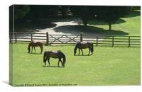 Horses Grazing, Canvas Print