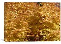 Autumn colours of gold, Canvas Print