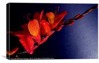 Red Wonder bloom, Canvas Print