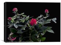 Rose Bush, Canvas Print