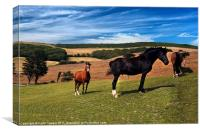 Horses Grazing Canvases & Prints