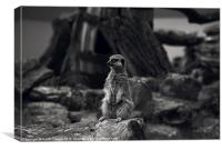 Meerkat Canvases and prints, Canvas Print