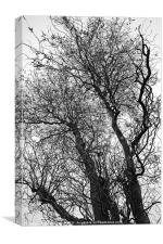 Winter Trees Canvases and Prints, Canvas Print