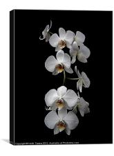 White Dendrobium Orchid Canvas & prints, Canvas Print