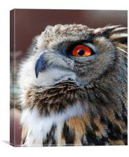Eurasian Eagle Owl Canvases & Prints, Canvas Print