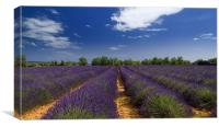 Lavander and sky, Canvas Print