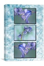 Bluebells Triptych Textured Background, Canvas Print