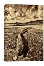 Driftwood Sepia, Canvas Print