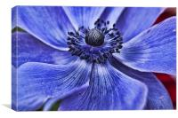 Blue Purple Poppy, Canvas Print