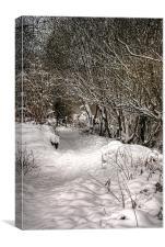 The snow path, Canvas Print